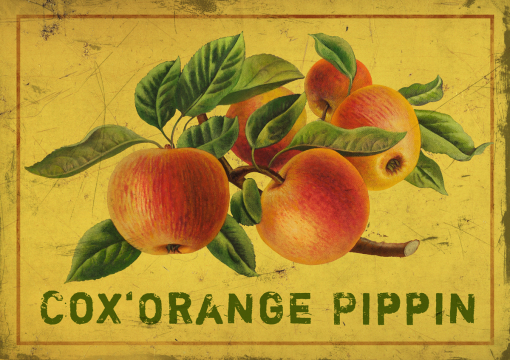 Apfel, Cox'orange, Dieter Ziegenfeuter, Illustration, Dortmund, Grafik Design