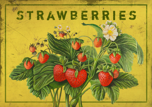 Dieter Ziegenfeuter, Illustration, Obst, Erdbeere,
